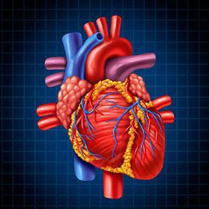Pemicu Penyakit Jantung Koroner