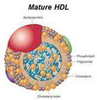tingkatkan Kolesterol HDL untuk menggantikan makanan penurun kolesterol