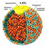 makanan penurun kolesterol LDL